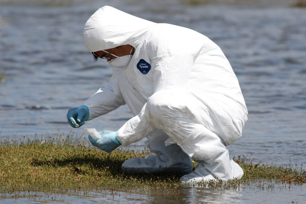 Hombre con traje protector blanco se agacha a recoger una muestra al lado del agua (© Ariuka/WCS Mongolia)