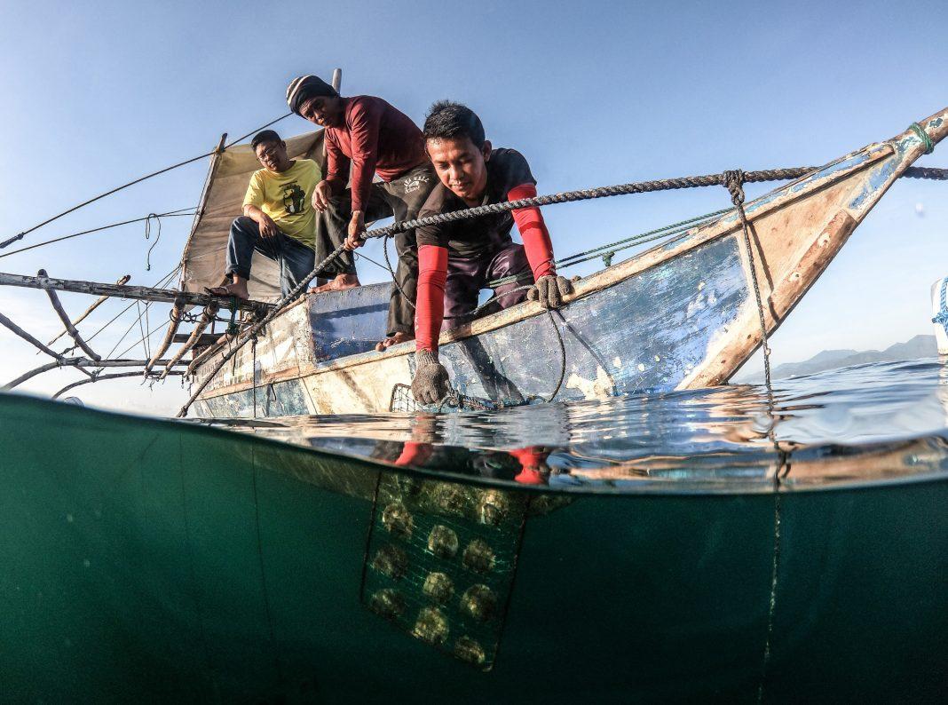 Men fishing abalone out of ocean (Jun Poblarod/USAID)