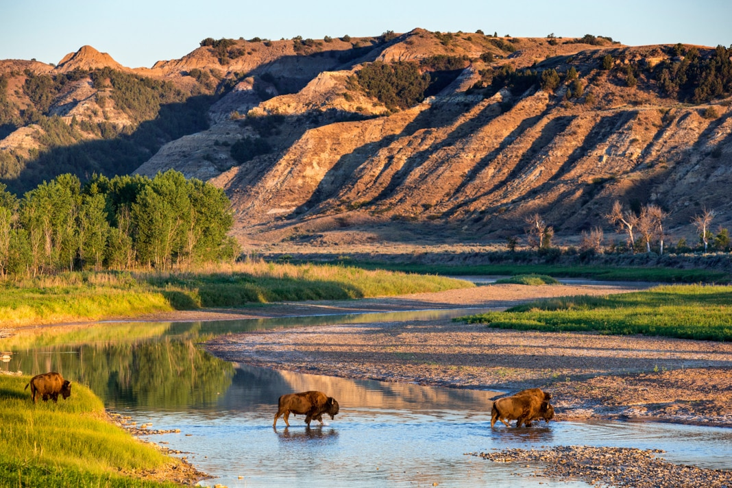 Bison in a river with mountains in the background (© Danita Delimont/Alamy)