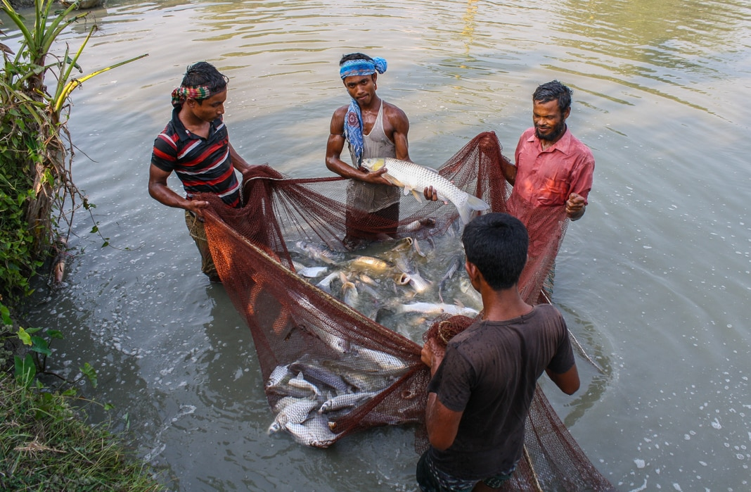 Men standing in water, hauling fish in a net (USAID)