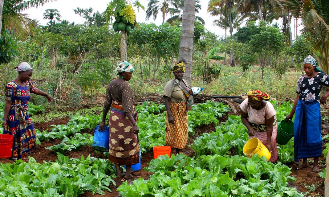 Women working in farm field (USAID)