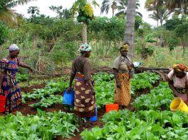 Women working in farm field (USAID)