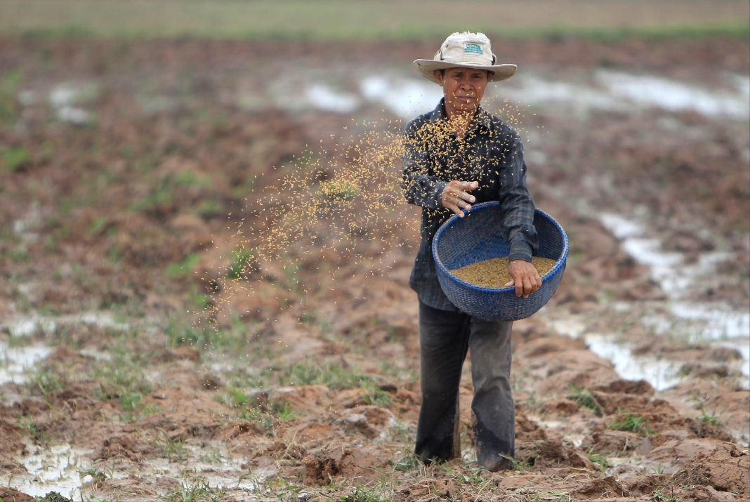 Man throwing rice seeds onto a field (© Heng Sinith/AP Images)