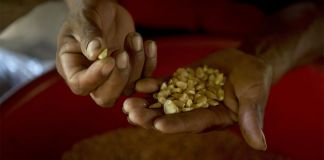 Hands holding seeds (© Moises Castillo/AP Images)
