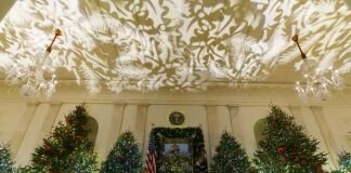 Christmas trees and an illuminated ceiling in the grand foyer of the White House (© Carolyn Kaster/AP Images)