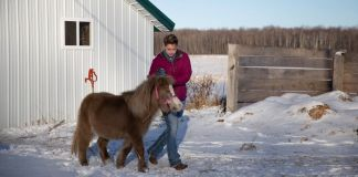 Woman walking small horse on snow-covered farm (©4-H Council)