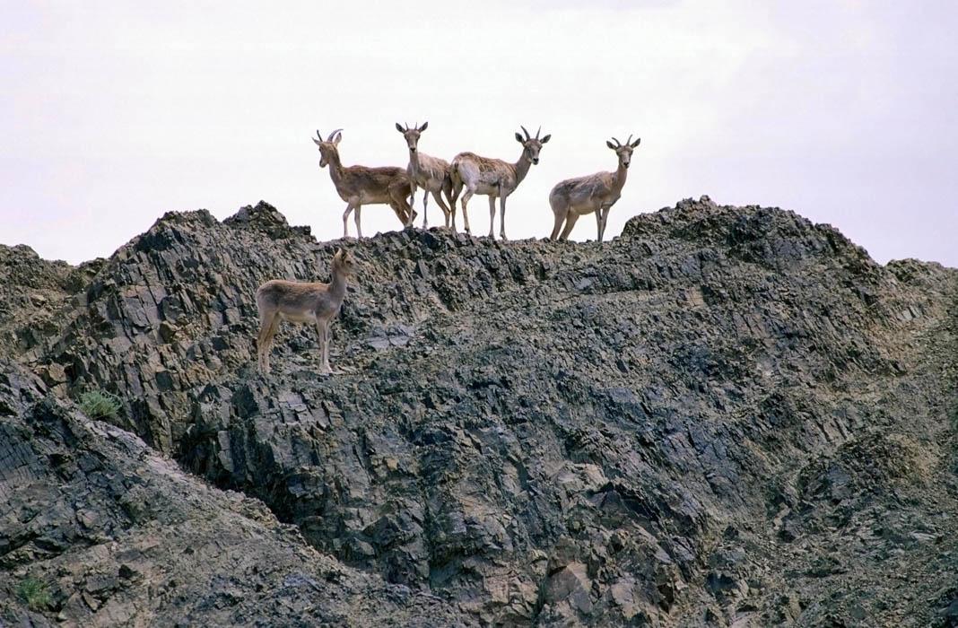 Un rebaño de uriales sobre unas rocas (© Nature Picture Library/Alamy)