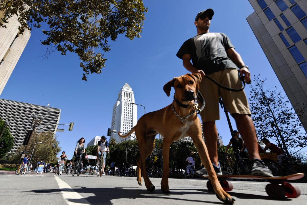Man on a skateboard walking his dog in the street (© Chris Carlson/AP Images)