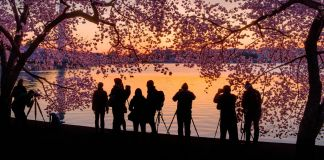 Silhouette of people standing at the Tidal Basin surrounded by cherry blossoms (© J. David Ake/AP Images)