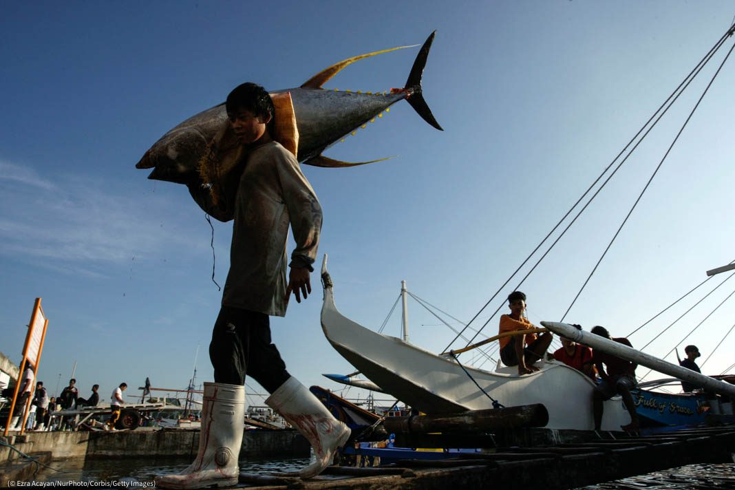 Person carrying large tuna on a dock (© Ezra Acayan/NurPhoto/Corbis/Getty Images)