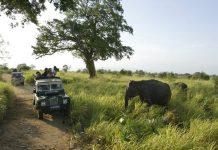 游客在斯里兰卡的乌达瓦拉维(Uda-Walawa)的一个国家公园内观赏野生大象(美联社图片)