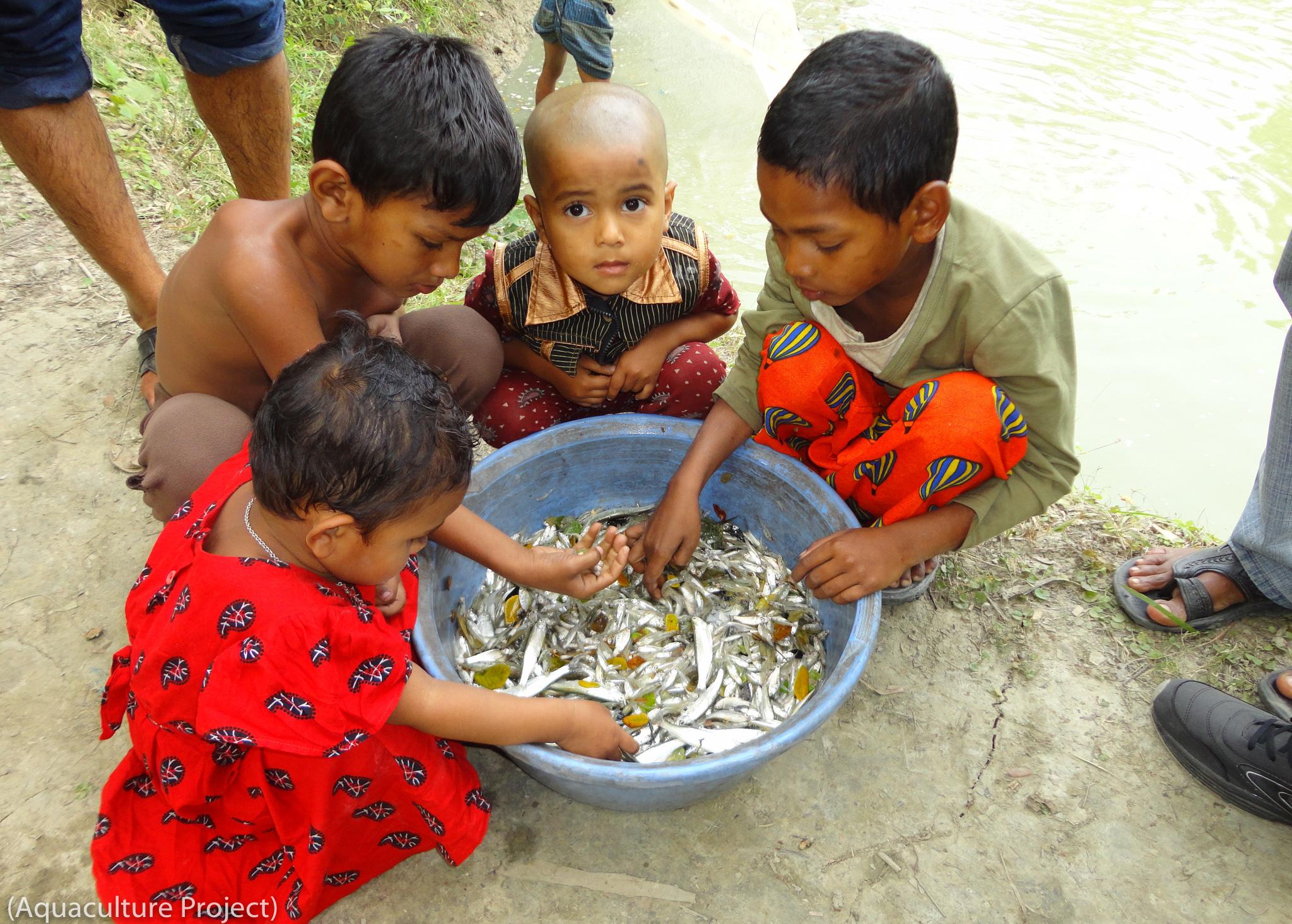 Quatre jeunes enfants autour d'une cuvette pleine de petits poissons (Aquaculture Project)