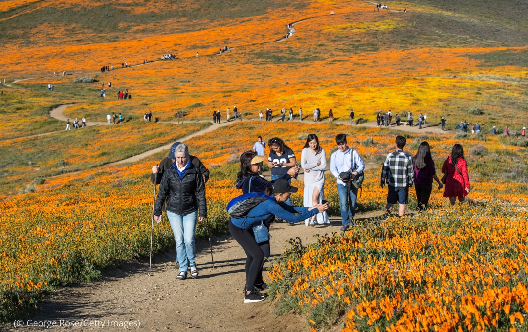 People on paths winding through fields of yellow-orange flowers (© George Rose/Getty Images)