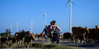People on motorbikes riding past wind turbines and cattle (© Hariandi Hafid/SOPA Images/LightRocket/Getty Images)