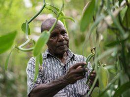 Farmer harvesting vanilla beans on his farm (© Thomas Cristofoletti/USAID)
