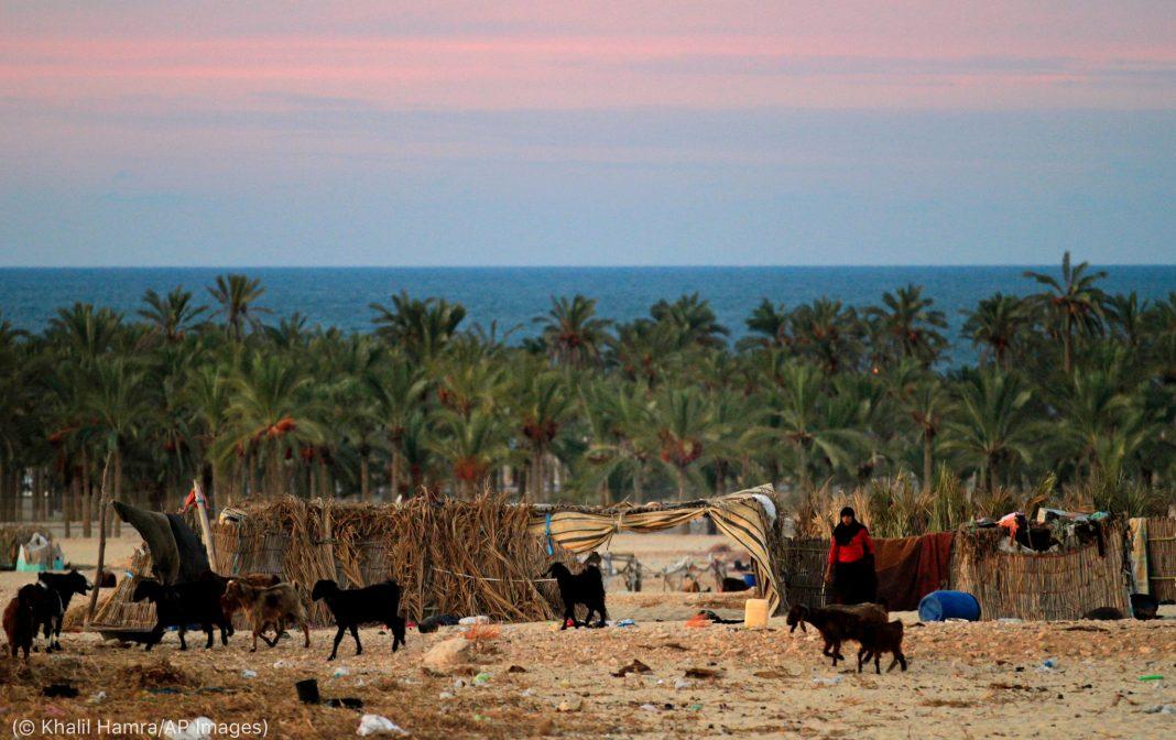 Une femme debout dans un champ, avec des chèvres autour d'elle (© Khalil Hamra/AP Images)