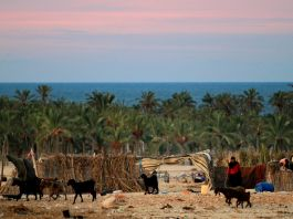Woman standing in field with goats (© Khalil Hamra/AP Images)
