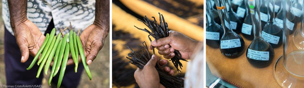 Triptych: Hands displaying fresh vanilla beans, hands gripping dried vanilla beans, rows of labeled glass flasks containing dark fluid (© Thomas Cristofoletti/USAID)