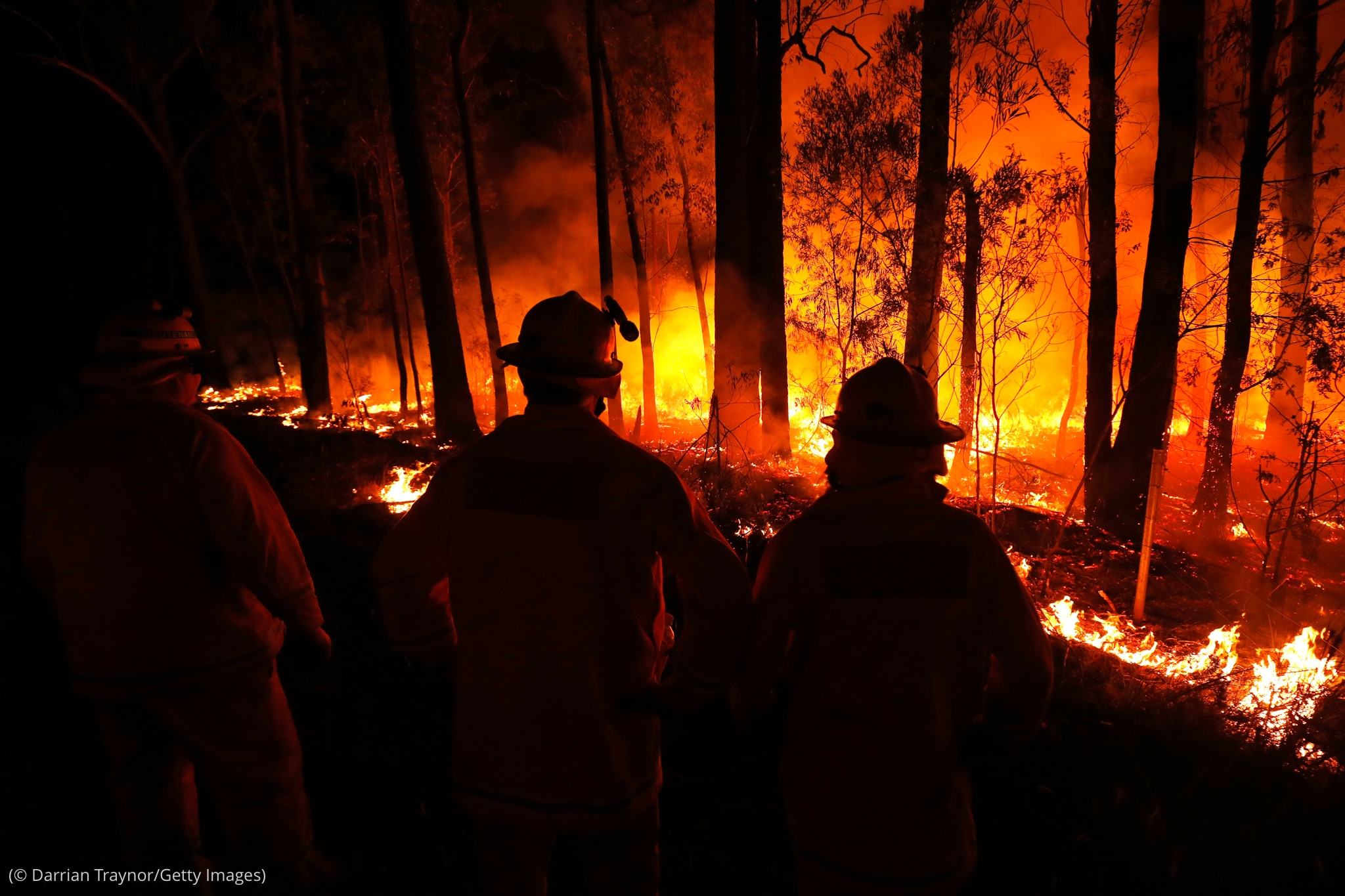 People looking at burning trees at night (© Darrian Traynor/Getty Images)