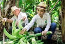 Man and woman with plantains (© Margarita Bajaña/Revista Zonalibre)