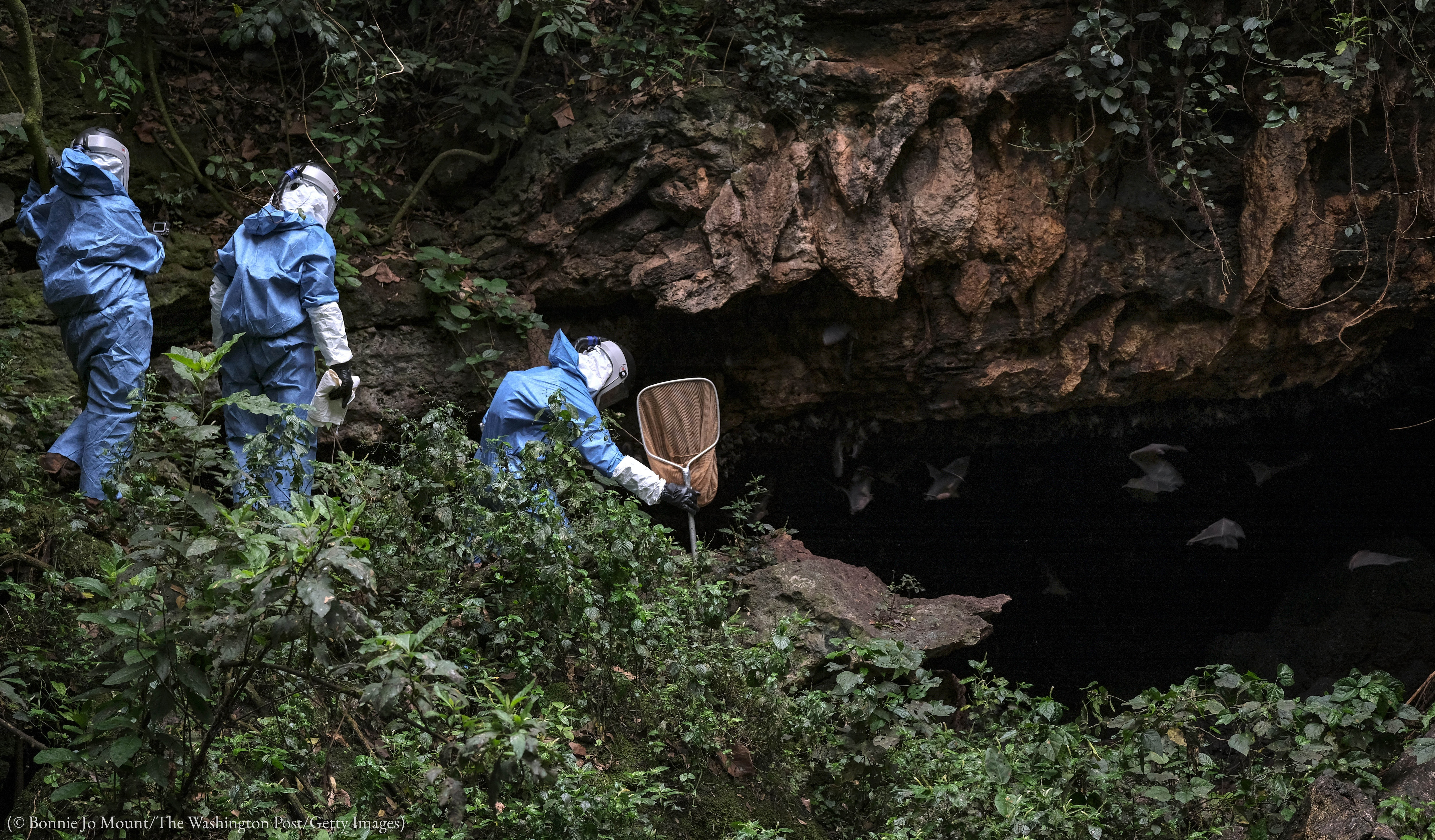 Three people in hazmat suits, one with butterfly net, at cave entrance (© Bonnie Jo Mount/The Washington Post/Getty Images)