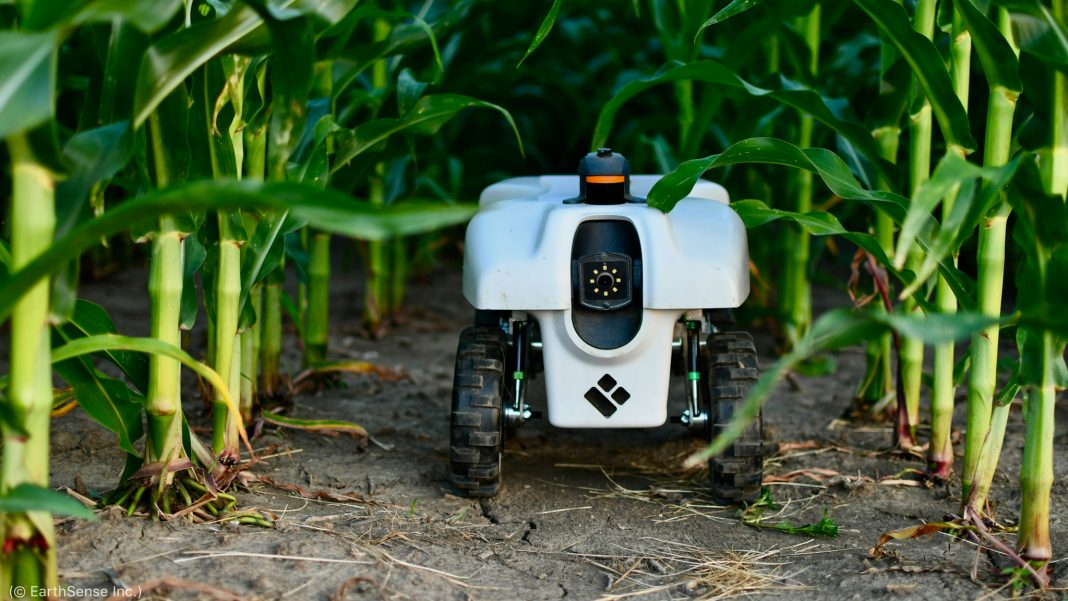 پودوں کے سبز ڈنٹھلوں کے درمیان کھڑا ایک روبوٹ۔ (© EarthSense Inc.)