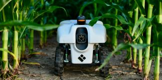 Robot sitting on ground among green stalks (© EarthSense Inc.)