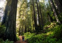 Male and female hiker walking through giant redwood forest (© Shutterstock)