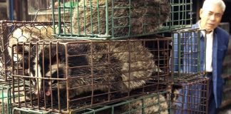 Man standing behind caged civets (