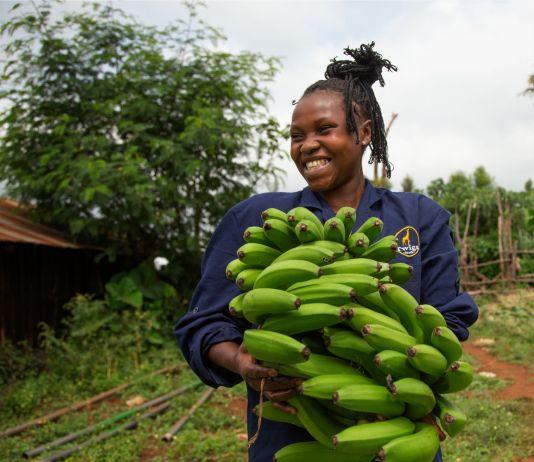 Mulher sorridente leva nos braços cachos de bananas verdes (© Twiga Foods Ltd.)
