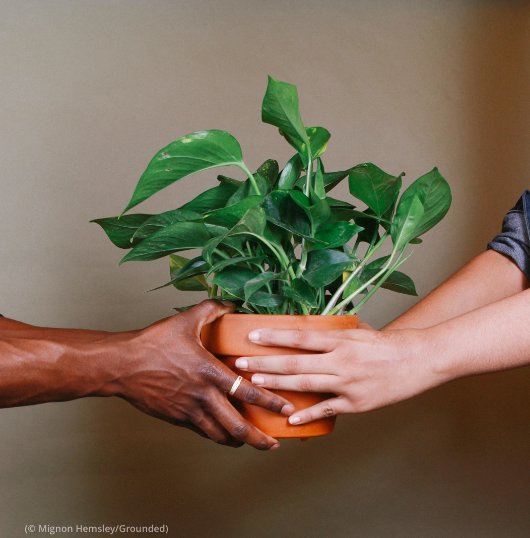 Hands passing a potted plant to another pair of hands (© Mignon Hemsley/Grounded)