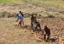 Пятеро мужчин перекапывают землю с помощью ручных инструментов (USAID/Micah Clemens)