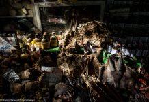 Peles de animais, outras partes de animais e garrafas em prateleiras (© Romeo Gacad/AFP/Getty Images)