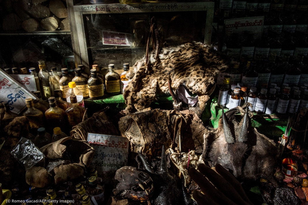 Animal skins, other animal parts and bottles on shelves (© Romeo Gacad/AFP/Getty Images)