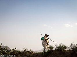 Pria di atas bukit memegang tongkat kayu sedang menatap cakrawala (Kelly Lynch/USAID