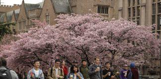 华盛顿大学学生经过校园(照片:美联社)