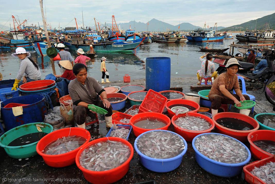 Plusieurs personnes assises par terre au milieu de grandes cuvettes remplies d'eau et de calmars, avec des bateaux en arrière-plan (© Hoang Dinh Nam/AFP/Getty Images)