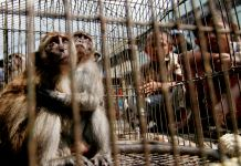 Children looking at caged monkeys (© AP Images)