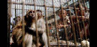 Crianças olham para macacos enjaulados (© AP Images)