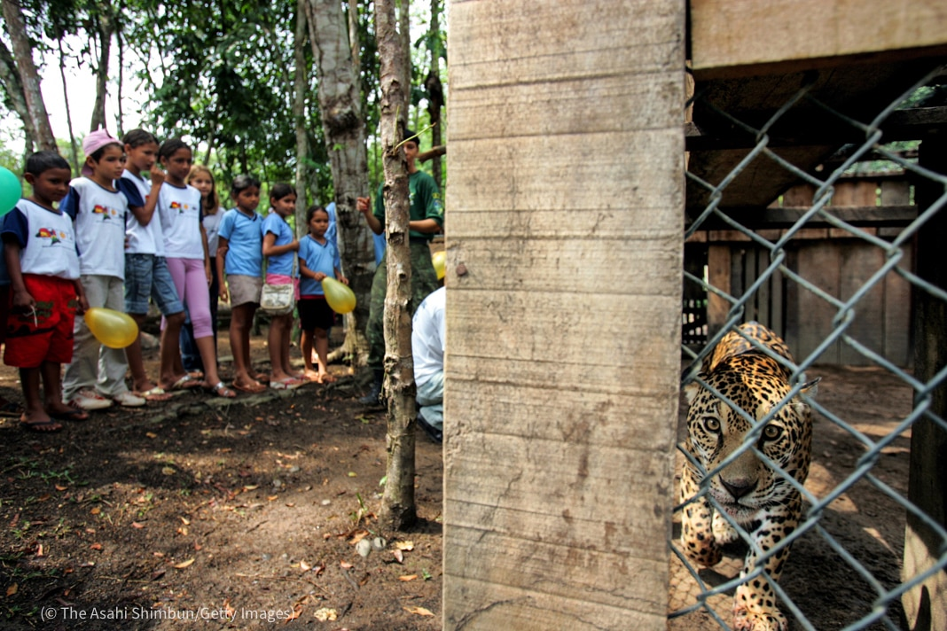 Des enfants regardant un jaguar dans une cage (© The Asahi Shimbun/Getty Images)