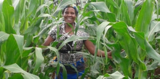 Smiling woman standing in field of maize (USAID)