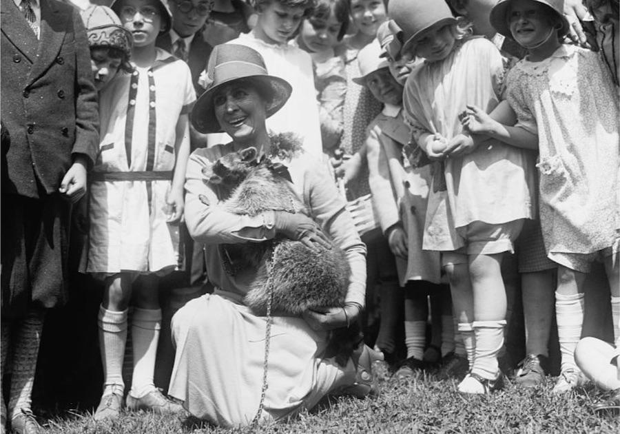 这是柯立芝夫人怀抱浣熊丽贝卡,在白宫院子里和捡复活节彩蛋的孩子们合影。(国会图书馆印刷品和照片部)