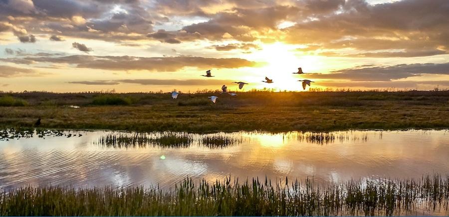 空气污染治理有助于鸟类生存(图片取自美国环境保护署脸书网页)