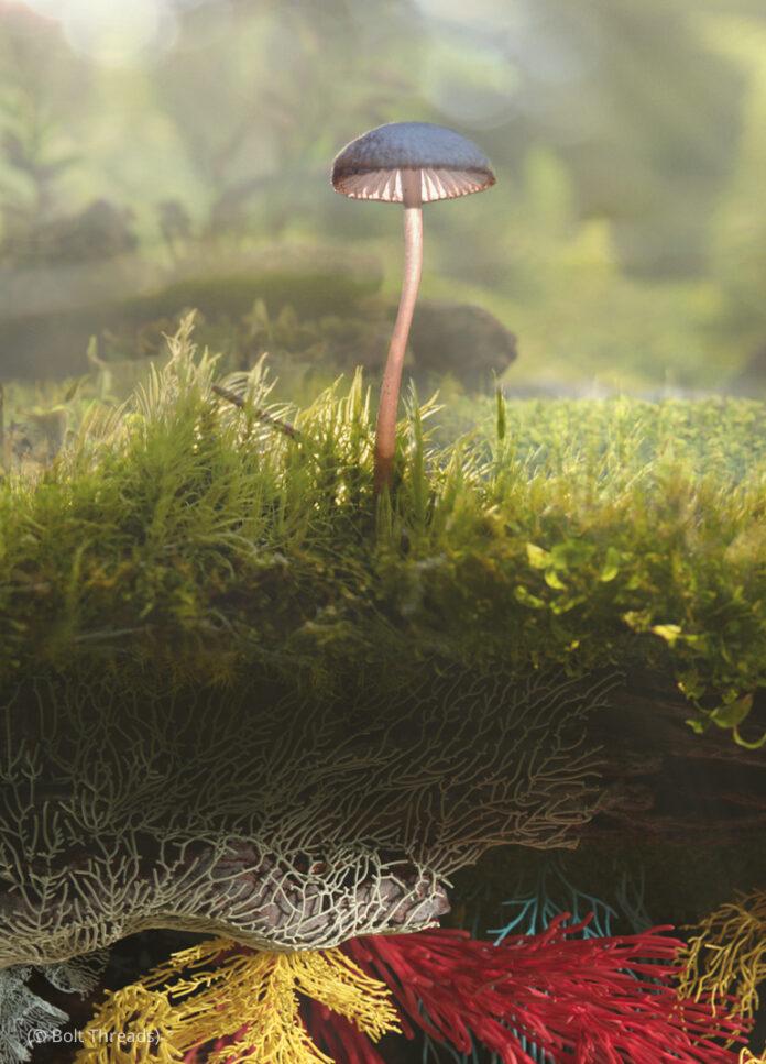 মাশরুম ও মাশরুমের তন্তুযুক্ত ভূগর্ভস্থ কাঠামো (© বোল্ট থ্রেডস)