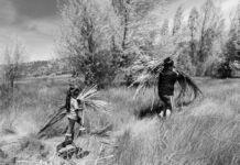 Duas pessoas carregando canas pelo campo (© Quirina Luna Geary)