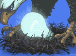An eagle guarding a nest with a light bulb in it.
