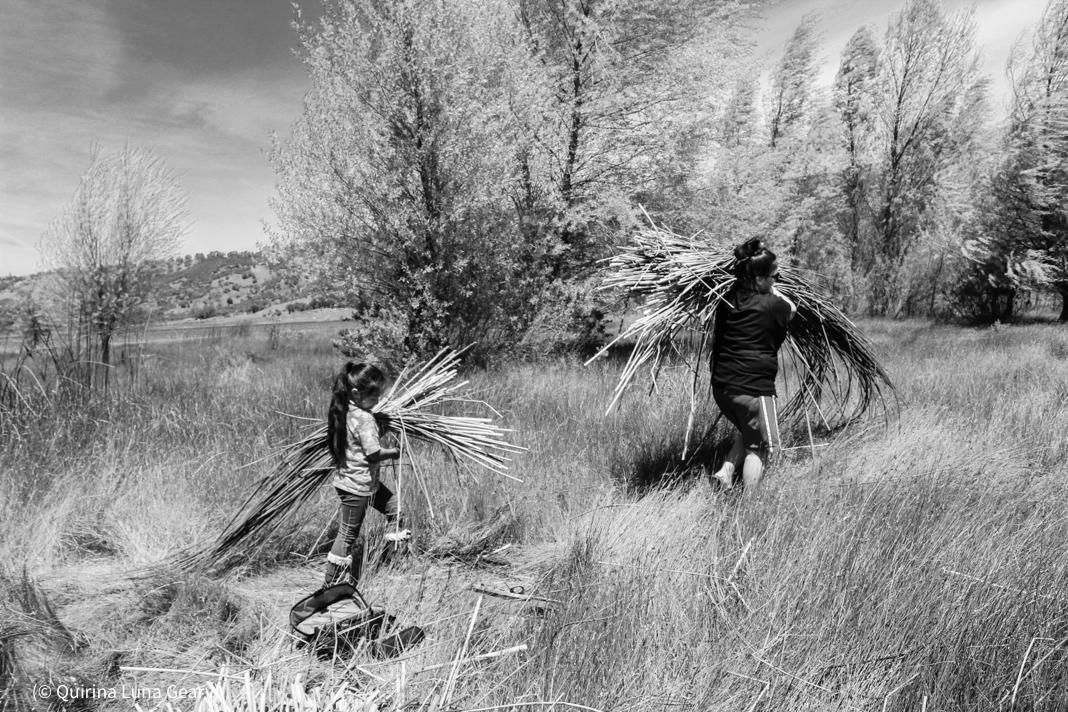 দুজন মানুষ মাঠ থেকে নলখাগড়া নিয়ে যাচ্ছেন। (©কিরিনা লুনা গিয়ারি)