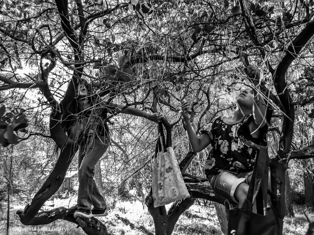 Dua anak memanjat pohon untuk memetik buah (© Quirina Luna Geary)